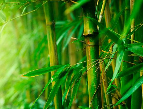2 coisas que você não sabe sobre o bambu que vão auxiliar no seu crescimento profissional.